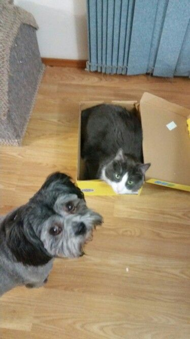 Where's my box says the dog