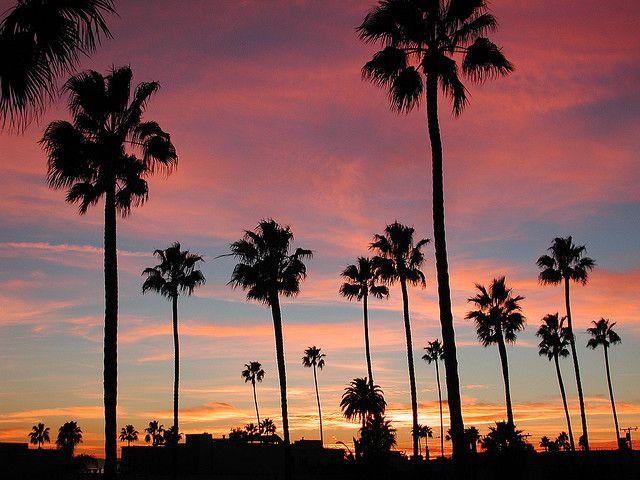 Long Beach California Sunset In Belmont Shore SunsetBelmont CaliforniaCalifornia Palm TreesBeautiful