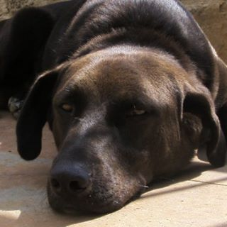 Buffakos is tired♥ #buffakos #doglovers #dogs#instagramdog #like4like #followme #doglovers