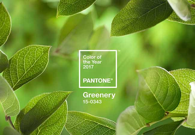 Loving Pantones Colour of the Year 2017. An uplifting and refreshing shade of Green perfect for promoting good health and wellbeing in the home.