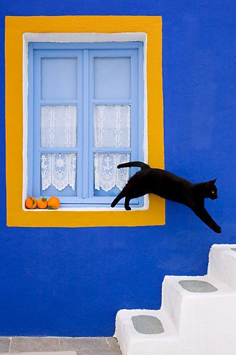 cats in greece - Google Search
