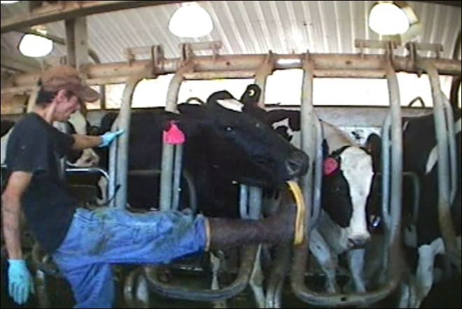 Idaho Gov. Butch Otter signs controversial 'ag gag' bill into law