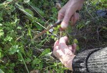 Jak sbírat a sušit léčivé byliny