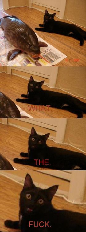 If you enjoy #Cute #Pets then visit #LOL #Funny #Cats via lolfunnycats.com to get more