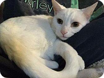 Sphyx Cat Rescue Arizona