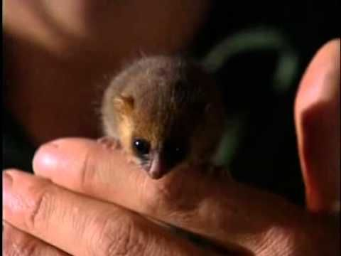 Jeff Corwin and a tiny Mouse Lemur