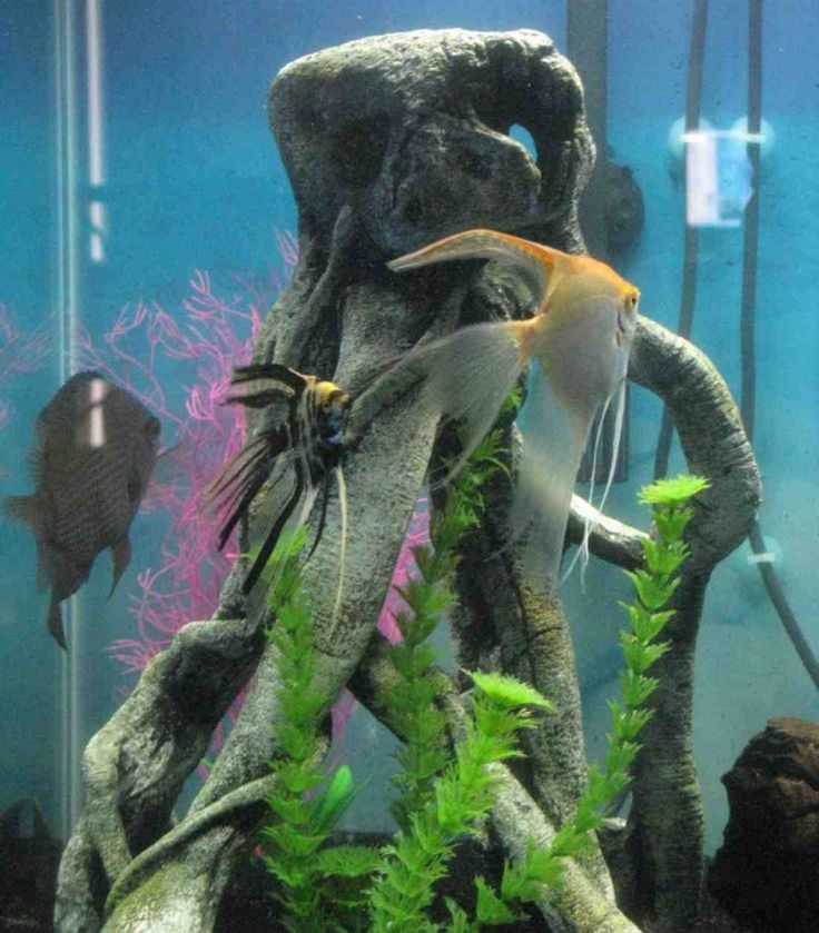 8 best spongebob squarepants aquarium ideas images on for Star wars fish tank decor