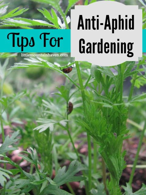 Tips for Anti-Aphid Gardening