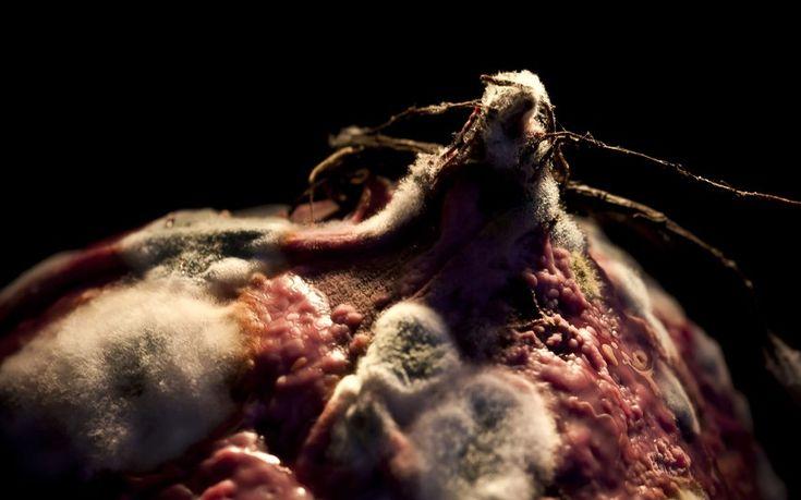 Rotten food landscapes. Mouldy fruit and vegitable. Heikki Leis