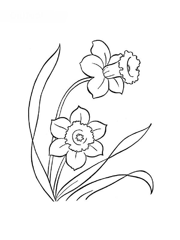 flower Page Printable Coloring Sheets hawaiian flower coloring - copy free coloring pages of hibiscus flowers