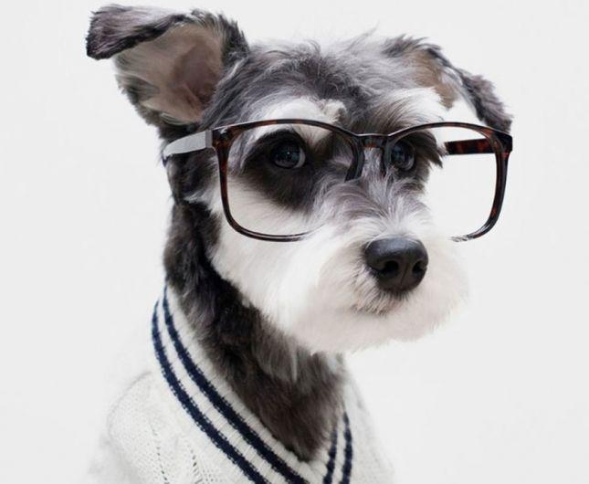 Hilarisch: deze grappige honden al gezien?