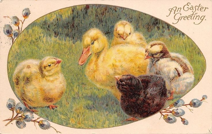 Easter~Newborn Black Yellow Mottled Chicks Surround Duckling~1908 Ernest Nister FOR SALE • £4.89 • See Photos! Money Back Guarantee. AP22101 Welcome to Refried.jeans Selling on Ebay for 15 Years 50,000+ in our Ebay Store... and Growing! Postcard Size: Standard 3 1/2 by 5 1/2 (Unless Otherwise Noted Above) USING 292072518150