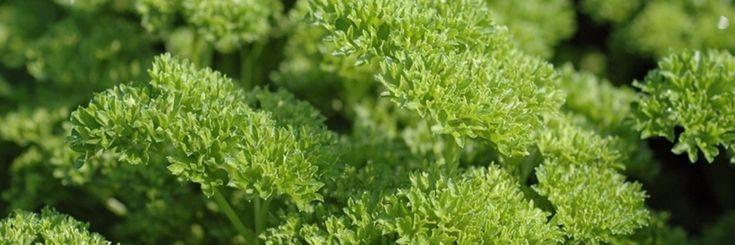 1. Lavendel is gekend voor zijn rustgevende eigenschappen. Je kunt er ook thee…