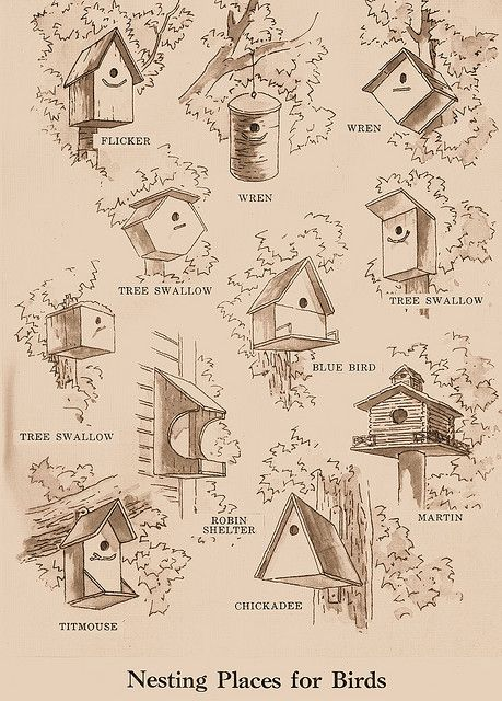Nesting Places for Birds