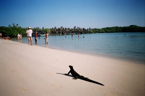 Sitios de mayor interés en las Islas Galápagos - Viajes Turismo Aventura y Lugares turisticos de Ecuador Playas