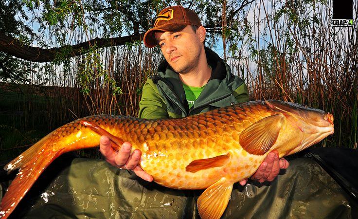 """Pe scurt, Navitas Angling Hooded Soft Shell este pur și simplu un """"must have"""" pentru orice pescar care caută o jachetă all-around. Ține departe umezeala și te protejează eficient împotriva ploilor scurte, a vântului... with Navitas Angling Romania  Detalii, FOTO și VIDEO doar AICI >>> http://www.crap24.ro/?p=6612"""