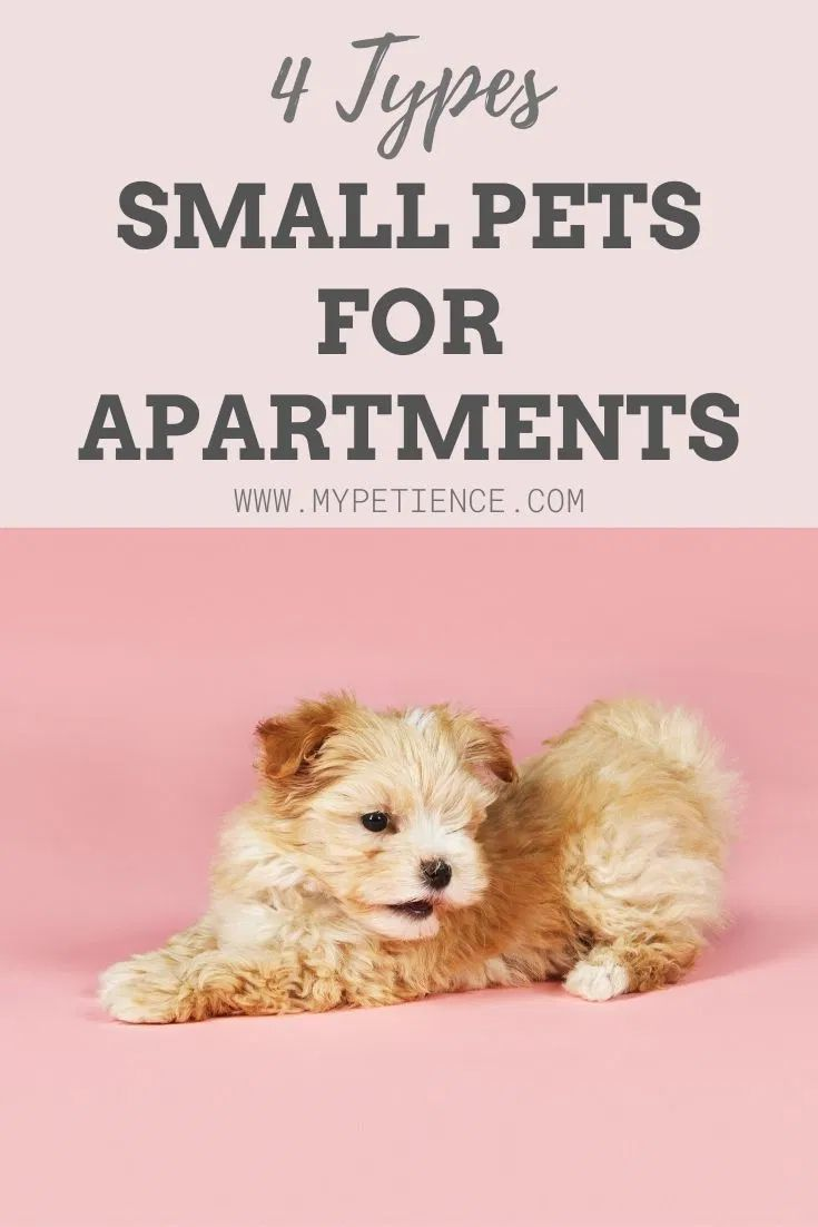 Discover The Best Small Pets For Apartments In 2020 Best Small Pets Small Pet Carrier Small Pets
