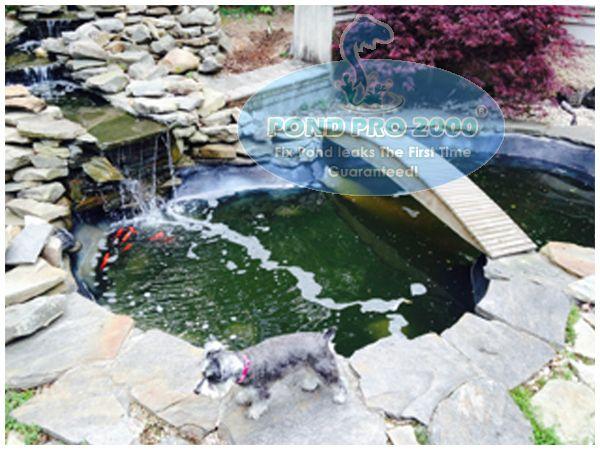 63 best fish pond repair images on pinterest fish ponds for Best koi pond liner