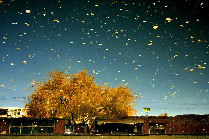 Gold Autumn: Urban Amber  2005  60x 90cm C-Print