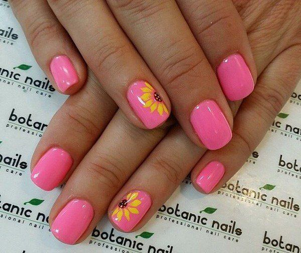 słonecznik w różu skąpany