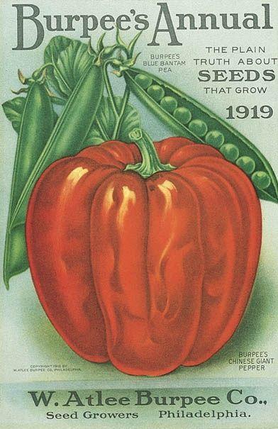 Seed Art   1919 Burpee's Annual