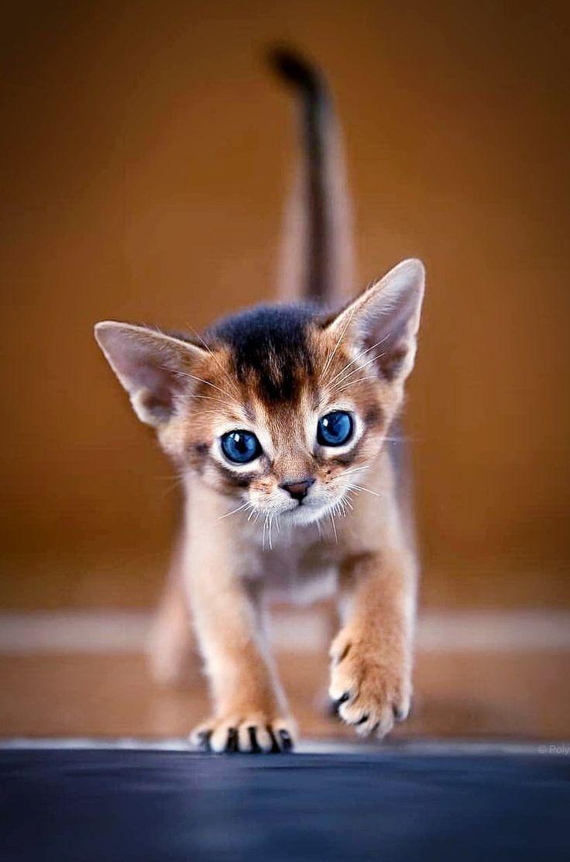 Katzen Bilder Mit Bildern Katzenbabys Susse Tiere Katzen