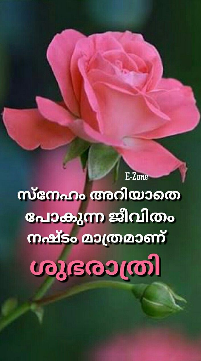 Pin By Aket Ket On Good Night Malayalam Good Night Flowers Morning Wish Good Morning Wishes