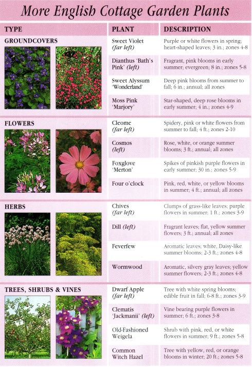 More English Garden Plants Mn Garden Pinterest