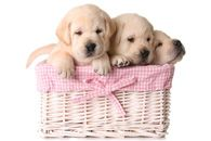 Have you ever looked for that puppy love.  www.wallpaper24.co.uk