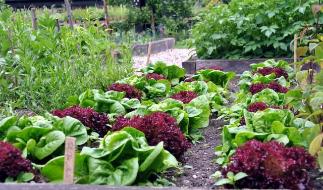 Contrary to what anyone thinks, it is actually easy to add edible annual plants o your existing organic garden or landscape. Here is our list of recommended plants that you can grow.