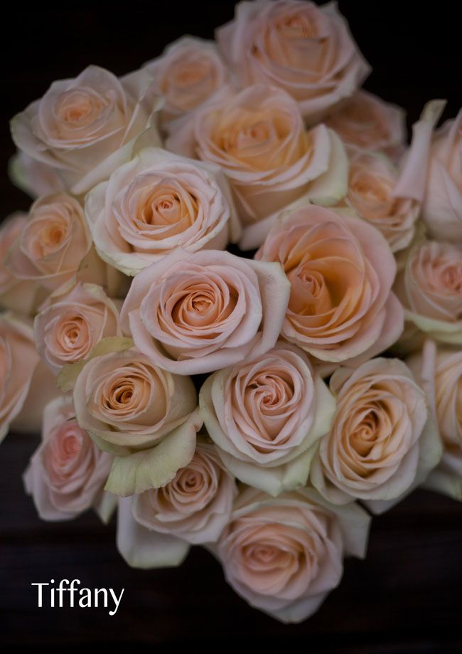 Tiffany roses in blush color for bridesmaids, ceremony arch and centerpieces