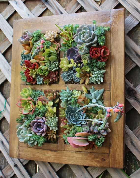 WOW!  Note to self!  Use one of my many antique window frames.. (Window Succulent Vertical Garden  Ready to by SucculentWonderland)