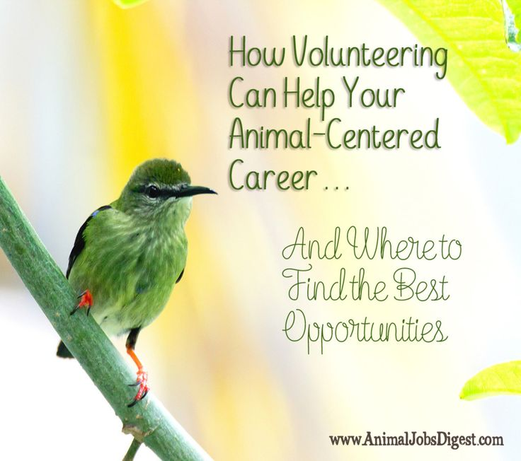 how volunteering can help your animal centered career and where to find the best - Jobs With Animals Best Jobs Working With Animals