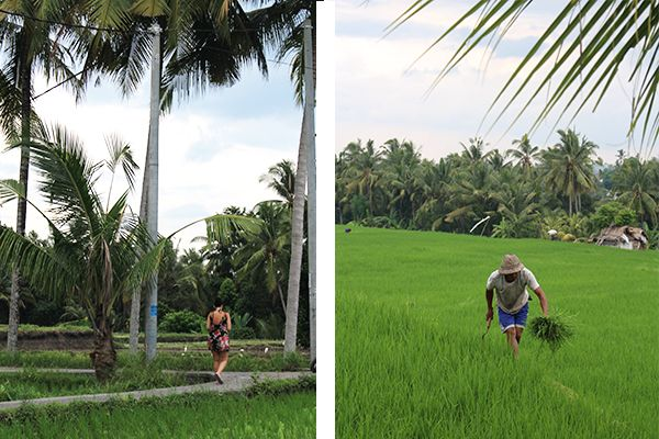 baliyogaretreat-ricefields