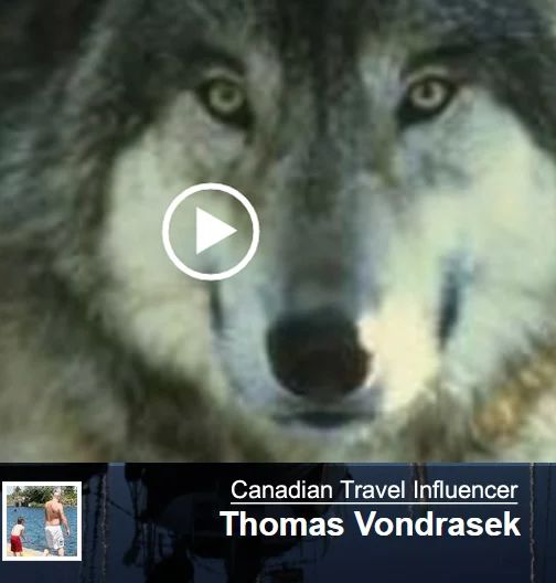 Top Travel Influencer Post Last Week on ehCanadaTravel.com. Wolf Video posted by T. Vondrasek