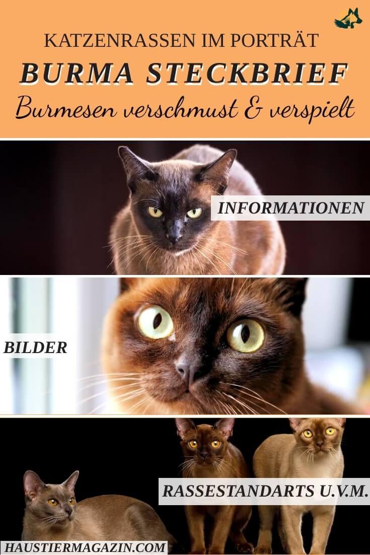 Tierschutzverein Marl Haltern Ev