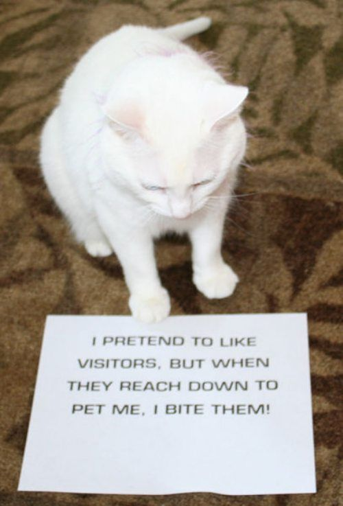 Now its the cats turn to be shamed (25 Photos)