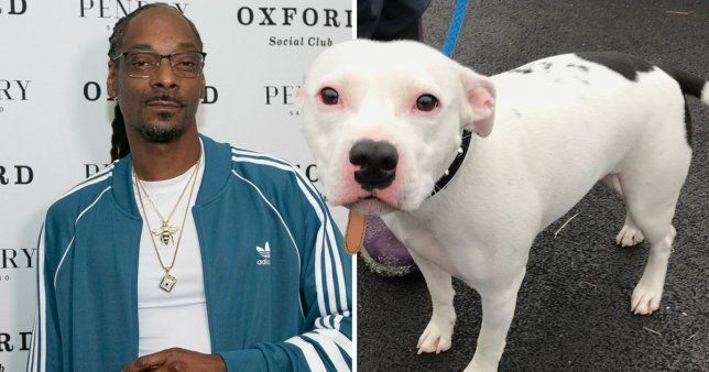 Snoop Dogg Offers To Adopt Abandoned Dog After Heartbreaking Rspca Footage Dog Names Dogs Dog Adoption