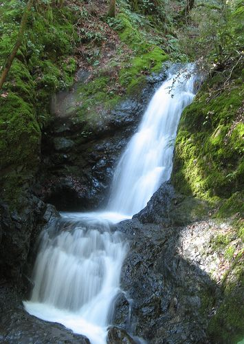Place to go by Morgan Hill...Waterfall Tour of Uvas Canyon County Park  The best easy hike south of California's Silicon Valley.