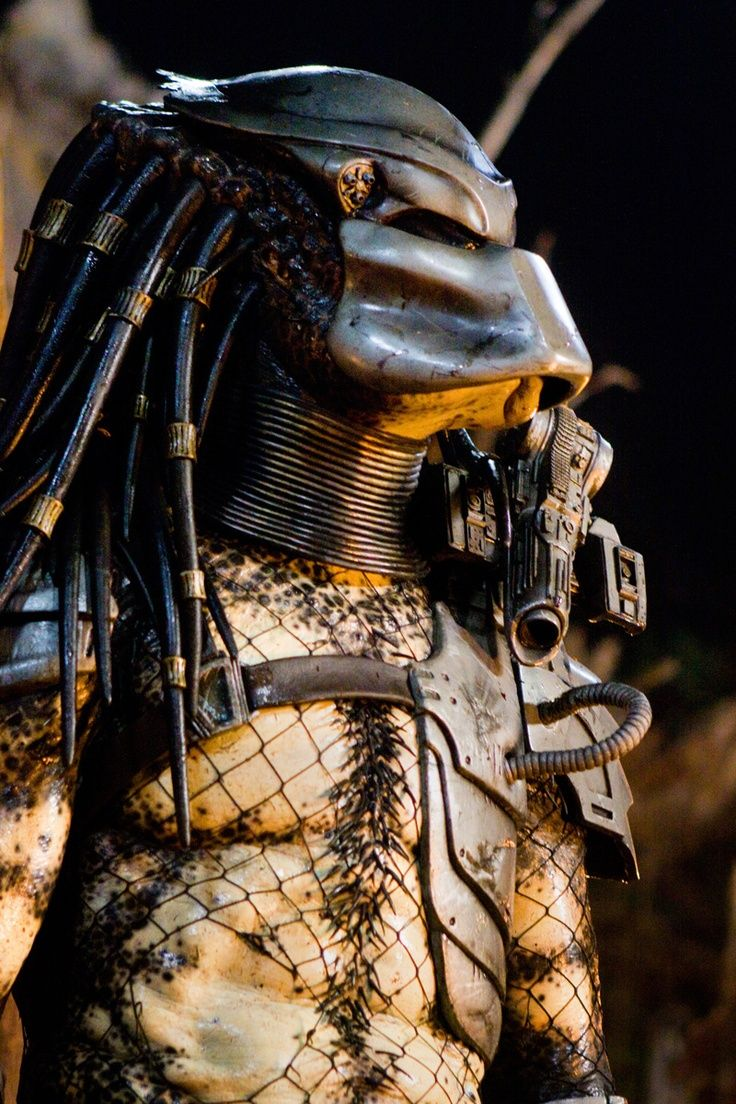 131 Best Predators Images On Pinterest