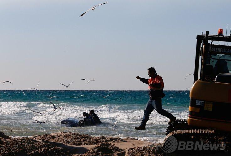 豪クイーンズランド(Queensland)州ゴールドコースト(Gold Coast)のパームビーチ(Palm Beach)で、座礁したザトウクジラの救出活動にあたるシーワールド(Sea World)の職員ら(2014年7月9日撮影)。(c)AFP/PATRICK HAMILTON ▼10Jul2014AFP 豪砂浜に子クジラ座礁、2日かけ救出成功 http://www.afpbb.com/articles/-/3020198 #Palm_Beach #Humpback_whale #Megaptera_novaeangliae #Baleine_a_bosse #Buckelwal #Bultrug #Dlugopletwiec #Baleia_jubarte #Knolkval #Ryhavalas #Knolval #Pukkelhval #Hnufubakur #Xibarta #Miol_mor_dronnach #Kambur_balina #Paus_Bungkuk