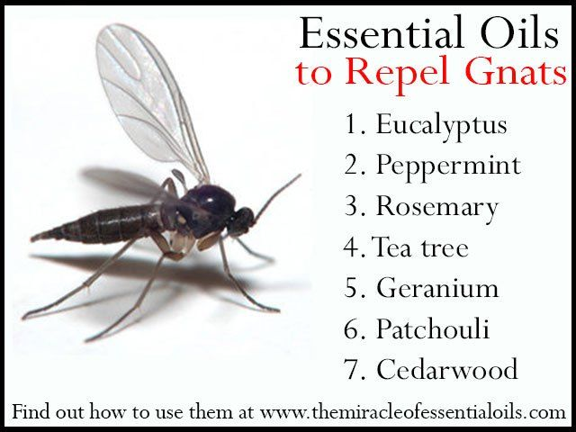 Best Gnat Repellent For Dogs