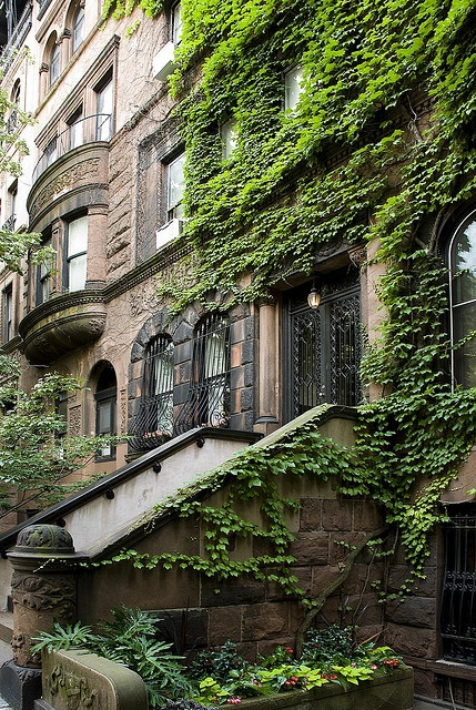 Brownstone with ivy.