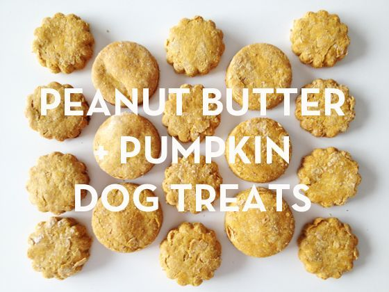 Peanut Butter & Pumpkin Dog Treats.  Hmmm...Might be the trick to getting my dogs to stop begging for people food.