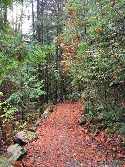 Cascade Falls Regional Park: trail leading the waterfall in Mission, BC