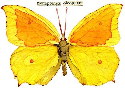 watercolor, butterfly, aceo, vintage collage: Butterflies Collage, Art Vlinder,  Sulfur Butterflies, Vintage Collage, Watercolor, Collage Butterflies, Vlinder Art, Butterflies Art, Art Shared