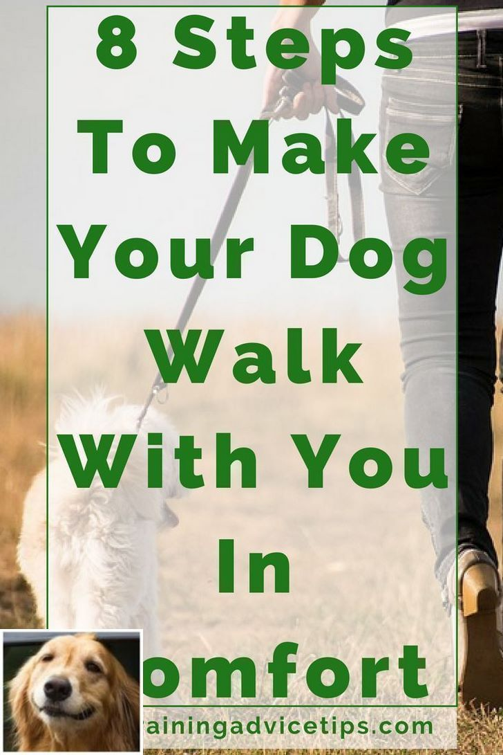 Stop Dog Jumping And Dog Training Tips Yards Check The Image For