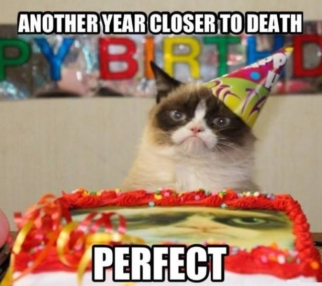 1000+ Images About ~Grumpy Cat~ On Pinterest