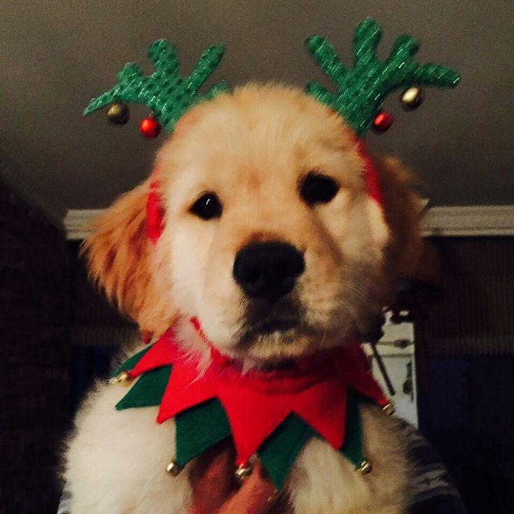 Navidad!