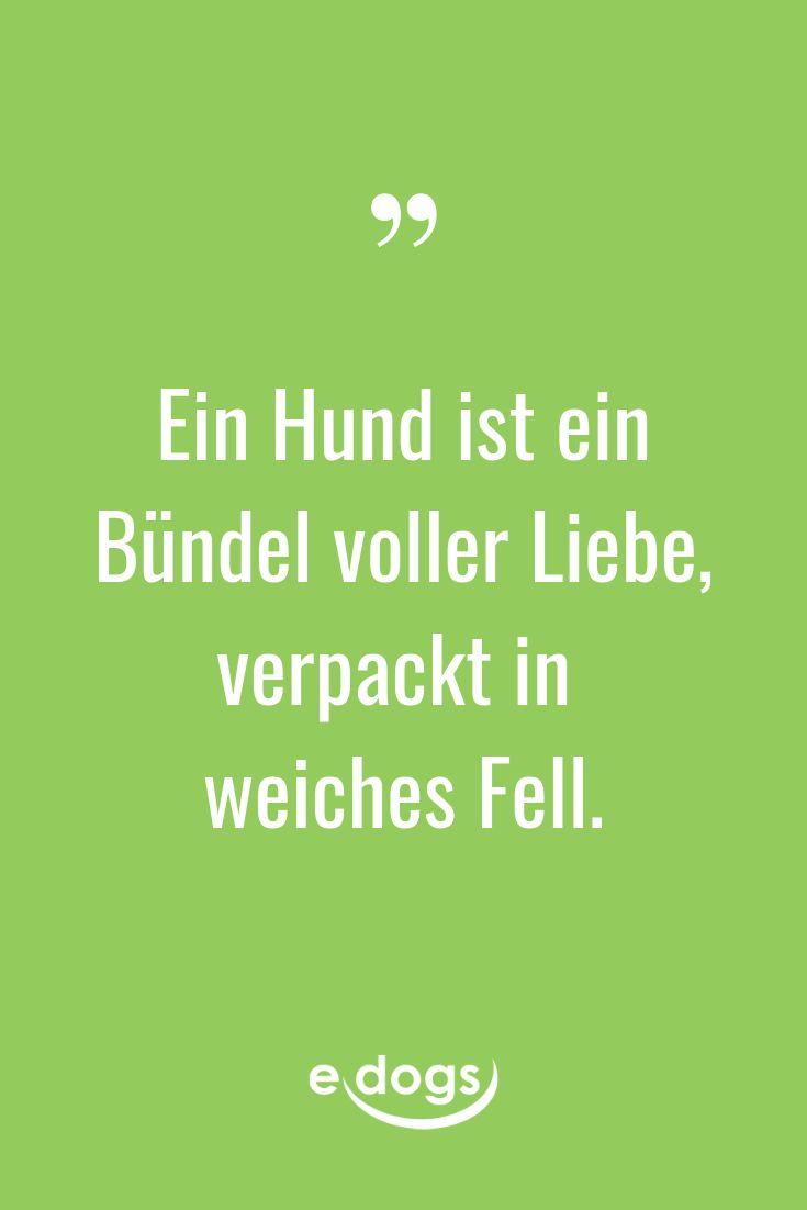 Hundezitate – edogs.de – Deutschlands sicherstes Hundeportal